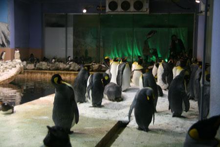 大量ペンギン