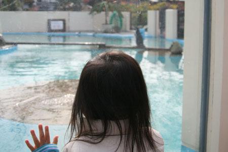 ペンギンを眺める娘